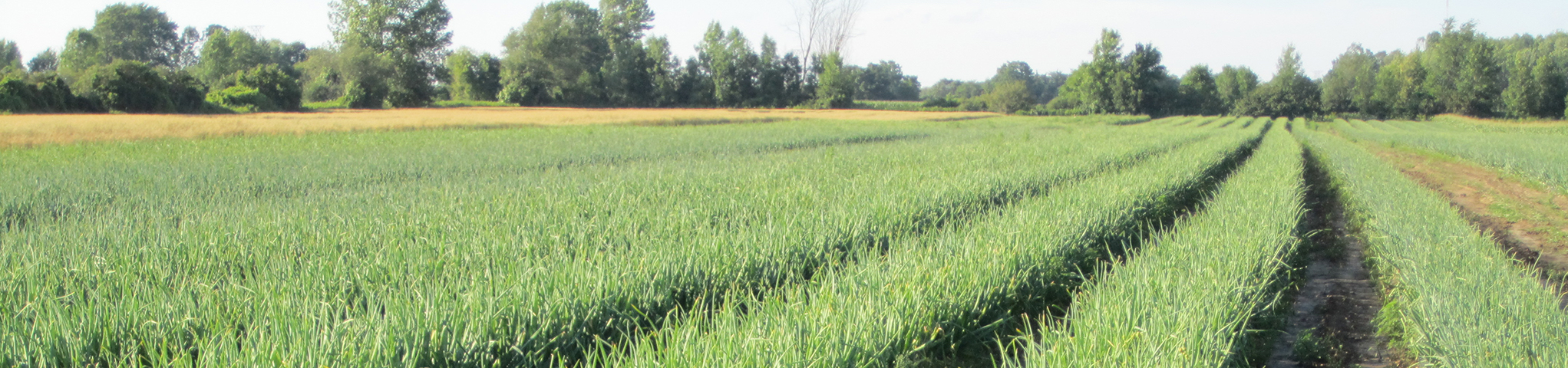 The Importance of Microbes in your Soil - Photo