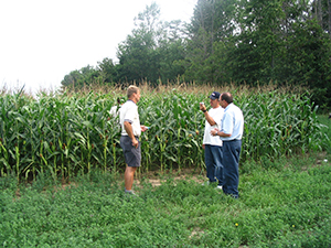 Agriculture Solutions staff with custormer examining corn crop