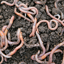 The Value of the Earthworm